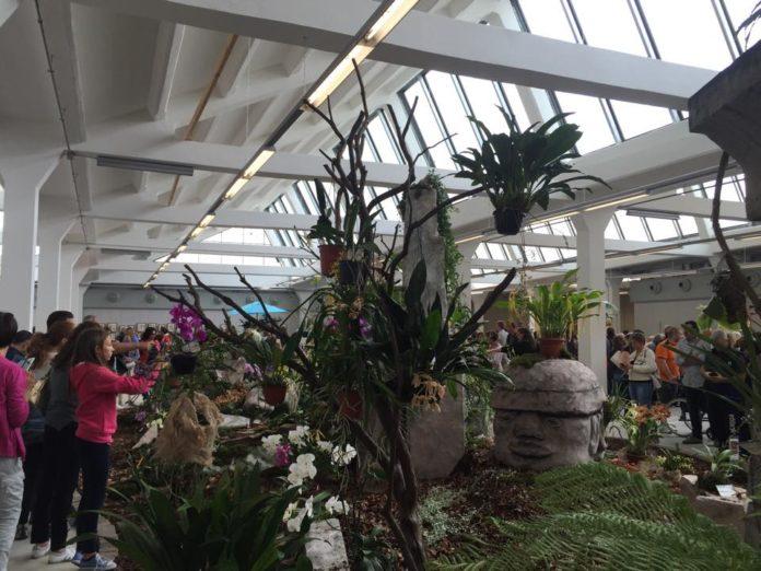Torna La Mostra Mercato Delle Orchidee Giardino Jacquard