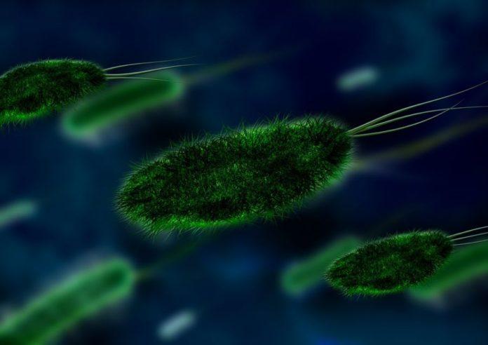 Contaminazione batteriologica nell'acquedotto di Arcugnano