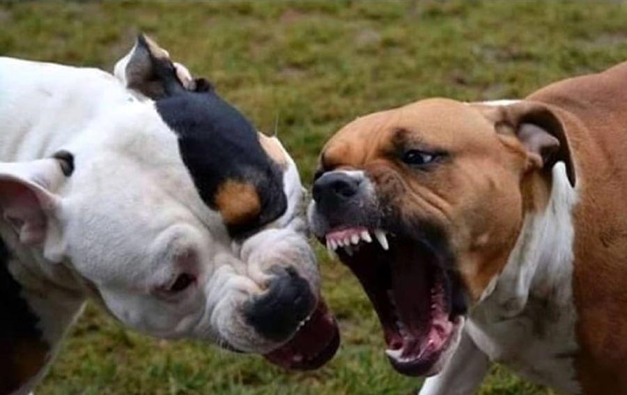 Assalita Da Un Cane Per Difendere Il Suo Cucciolo Unanziana Cade E